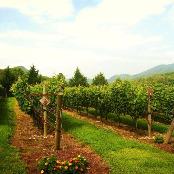12 Spies Vineyards & Farm