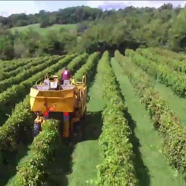 Rocky Waters Vineyard