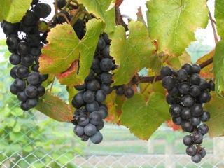 Ardon Creek Vineyard and Winery