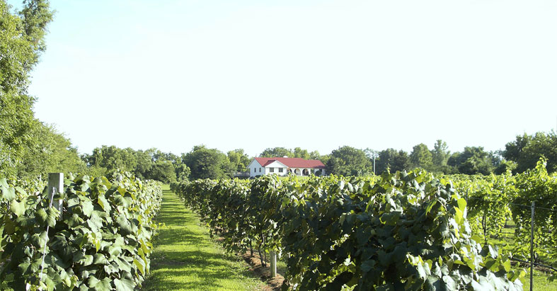 Kugler's Vineyard