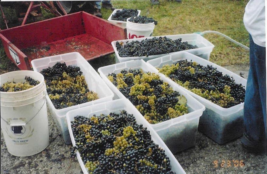 Maine Coast Vineyards