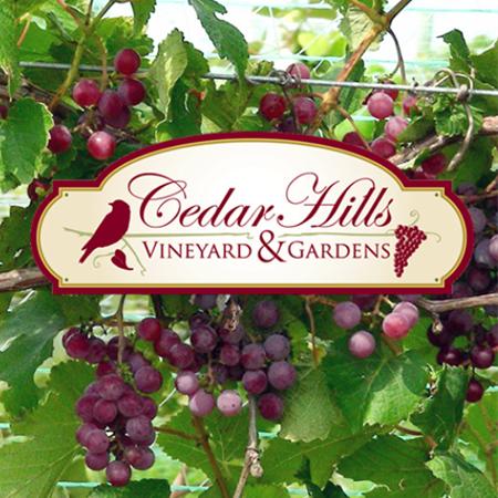 Cedar Hills Vineyard