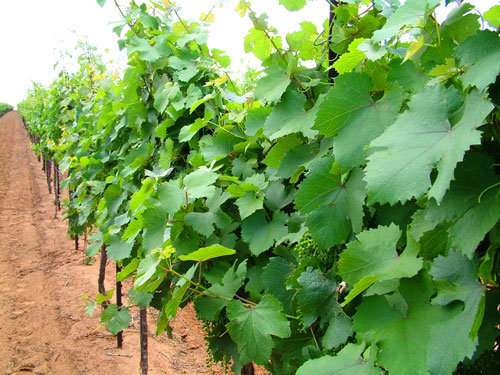Bingham Family Vineyards & Farm