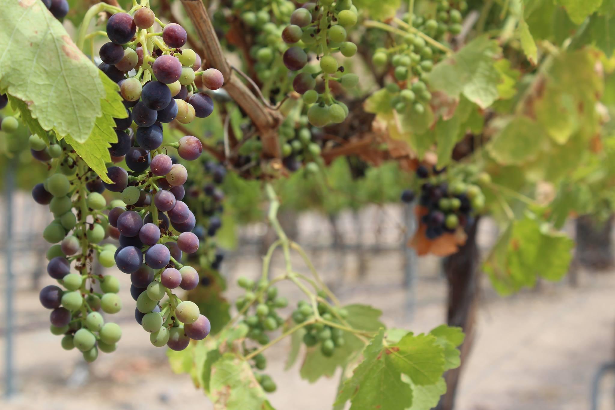 Oak Creek Vineyards and Winery