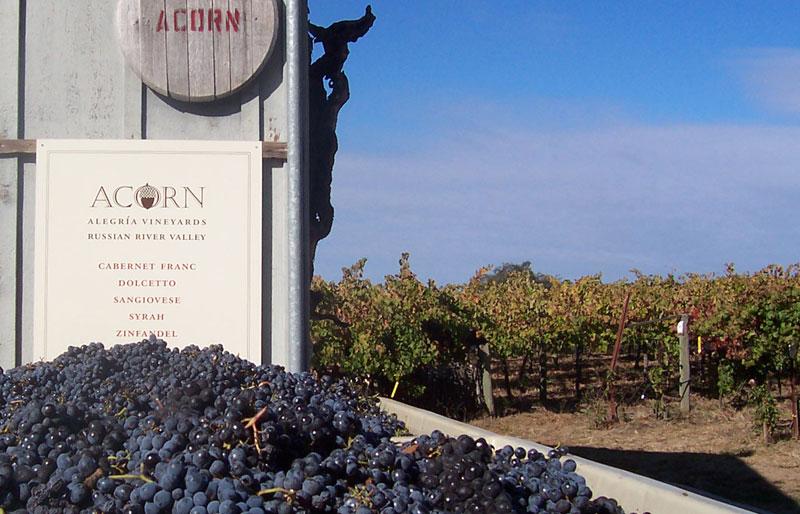 ACORN Winery